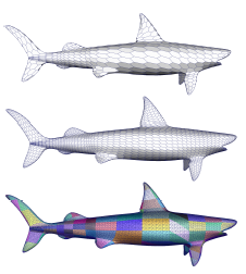A shark with hexagonal faces at two successive resolutions (top) and its corresponding connectivity maps (bottom).